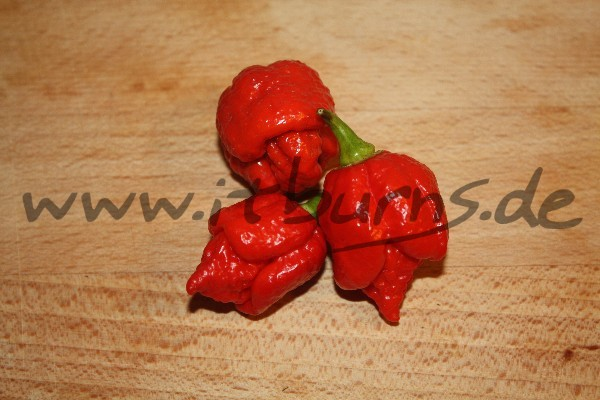 Trinidad Scorpion Moruga Red 01